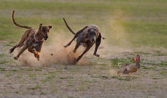 Run, Peter! Run Fast!