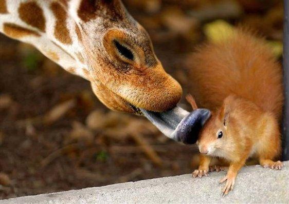 Friends Take Care of Friends