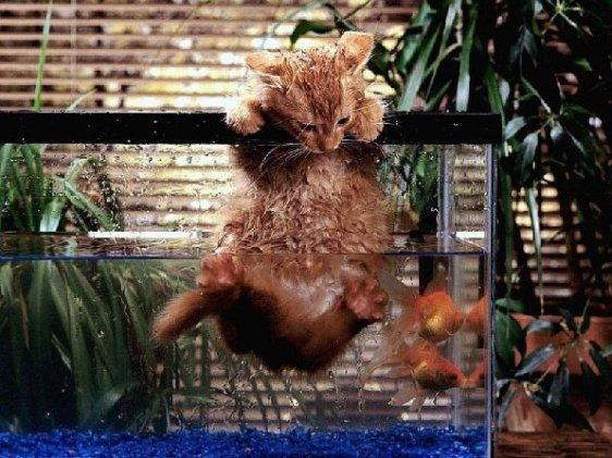 drowning kitten