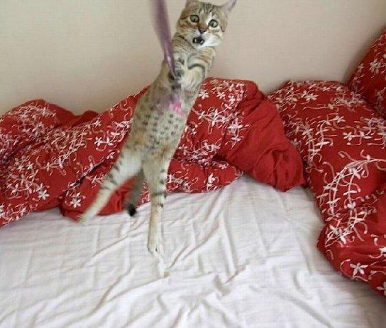 swingin kitty